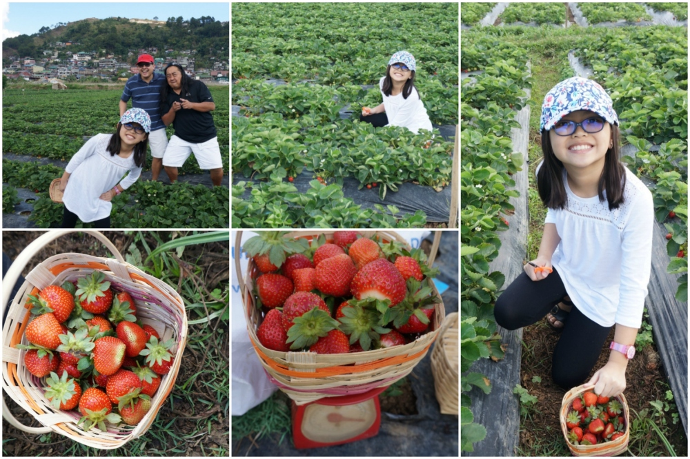Day 1 - Strawberry Picking 2